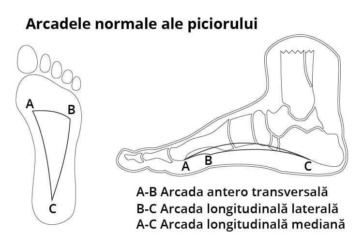 Arcadele normale ale piciorului